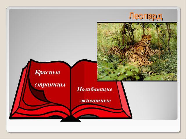 Леопард Красные страницы Погибающие животные