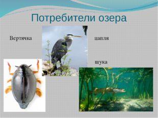 Потребители озера Вертячка цапля щука