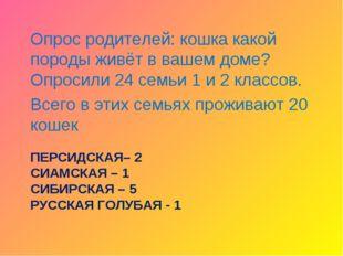 ПЕРСИДСКАЯ– 2 СИАМСКАЯ – 1 СИБИРСКАЯ – 5 РУССКАЯ ГОЛУБАЯ - 1 Опрос родителей: