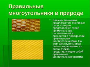 Правильные многоугольники в природе Вашему вниманию предлагаются пчелиные сот