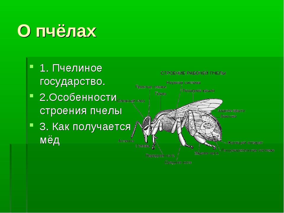 О пчёлах 1. Пчелиное государство. 2.Особенности строения пчелы 3. Как получае...
