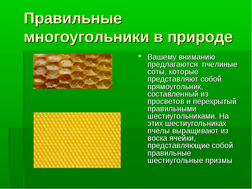 Правильные многоугольники в природе Вашему вниманию предлагаются пчелиные сот...