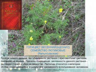 Пройдя немого дальше, мы обнаружили растения с ярко-желтыми цветками, похожим