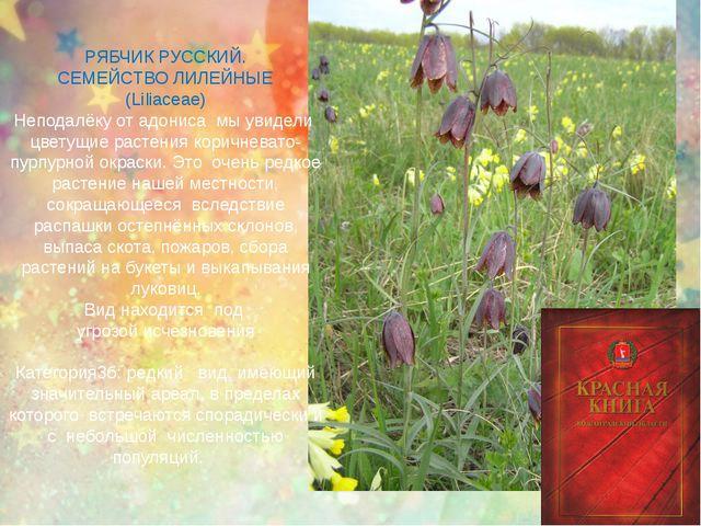 РЯБЧИК РУССКИЙ. СЕМЕЙСТВО ЛИЛЕЙНЫЕ (Liliaceae) Неподалёку от адониса мы увиде...
