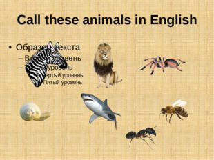 Call these animals in English