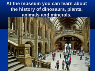 At the museum you can learn about the history of dinosaurs, plants, animals a
