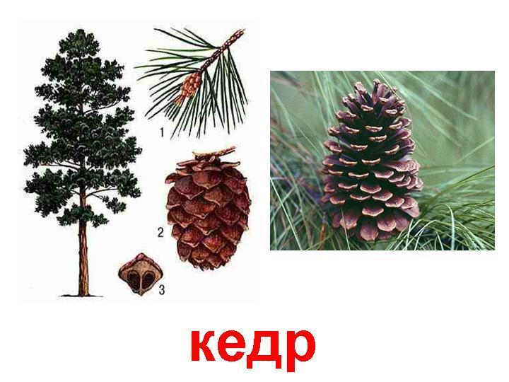 http://www.stihi.ru/pics/2013/10/30/10011.jpg