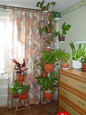 http://orhide.ru/wp-content/uploads/2014/09/3009a-229.jpg