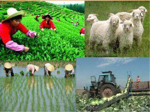 Совместное открытие знаний – От чего будет зависеть развитие отраслей сельско