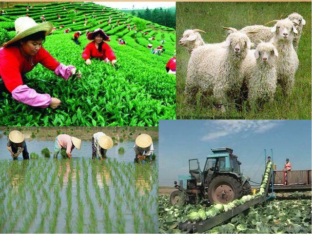 Совместное открытие знаний – От чего будет зависеть развитие отраслей сельско...
