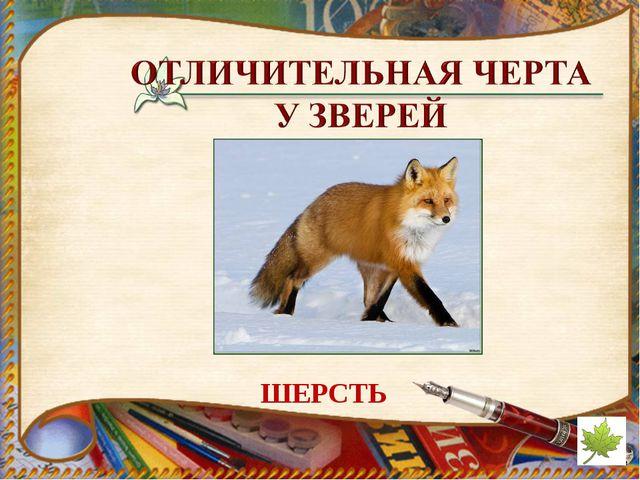 ШЕРСТЬ