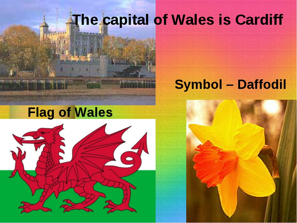 The capital of Wales is Cardiff Flag of Wales Symbol – Daffodil
