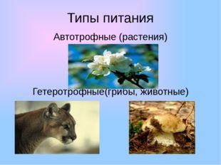 Типы питания Автотрофные (растения) Гетеротрофные(грибы, животные)