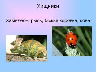 Хищники Хамелеон, рысь, божья коровка, сова