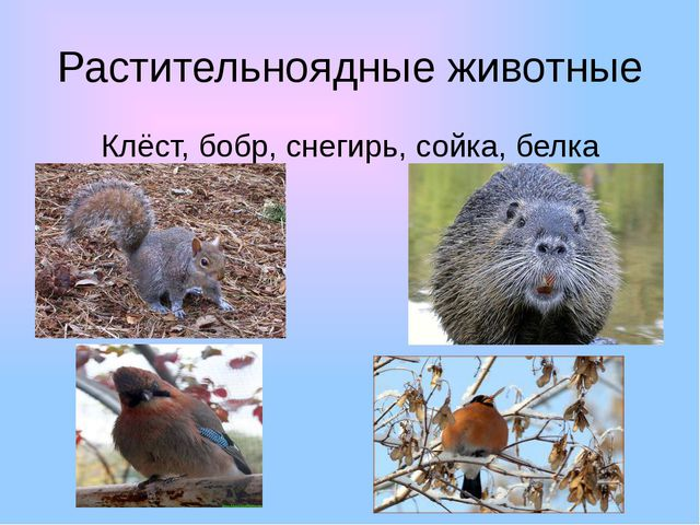 Растительноядные животные Клёст, бобр, снегирь, сойка, белка