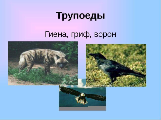 Трупоеды Гиена, гриф, ворон