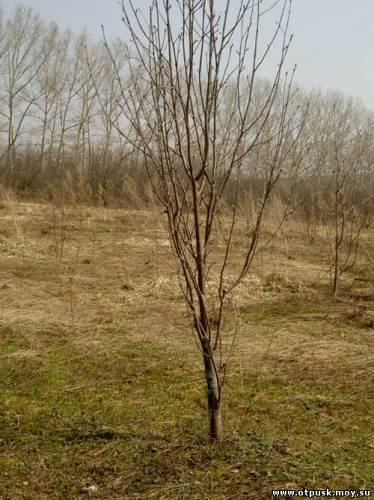 мал.дерево.jpg