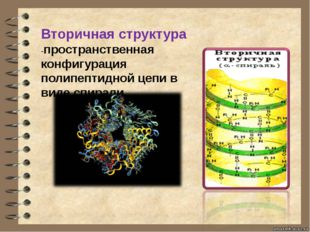 Вторичная структура -пространственная конфигурация полипептидной цепи в виде