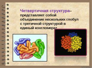 Четвертичная структура– представляет собой объединение нескольких глобул с тр