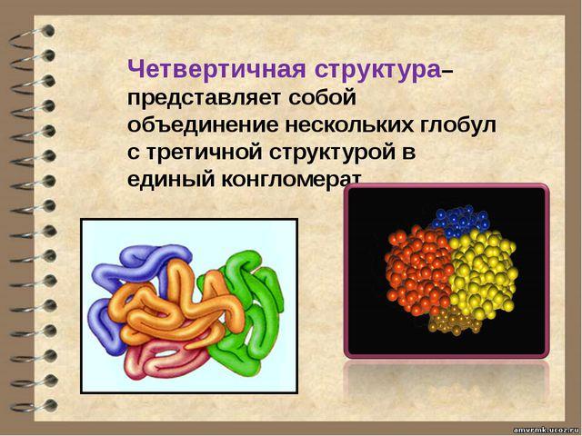 Четвертичная структура– представляет собой объединение нескольких глобул с тр...