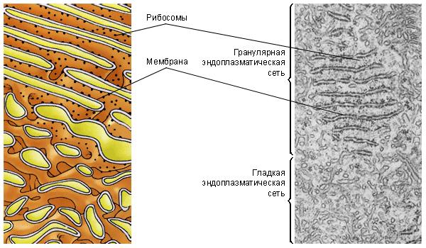 4класс контрольная работа по теме клетка