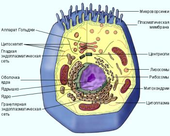 Контрольная работа по биологии класс по теме Клетка  4класс контрольная работа по теме клетка