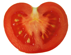 https://upload.wikimedia.org/wikipedia/commons/d/d8/Tomato-cut_vertical.png