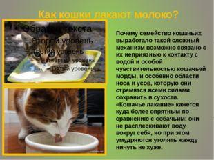 Как кошки лакают молоко? Почему семейство кошачьих выработало такой сложный