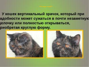 Как видят кошки? У кошек вертикальный зрачок, который при надобности может с