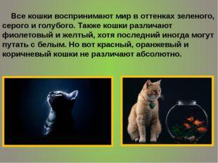Все кошки воспринимают мир в оттенках зеленого, серого и голубого. Также кош