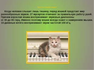 Как и что слышат кошки? Когда человек слышит лишь тишину, перед кошкой предс