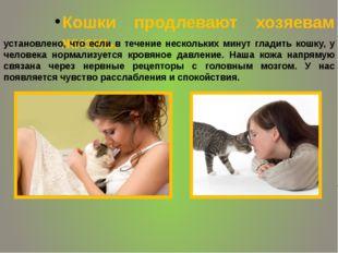 Кошки продлевают хозяевам жизнь. установлено, что если в течение нескольких