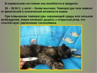 . В нормальном состоянии она колеблется в пределах 38 – 39,50 С, у котят – бо