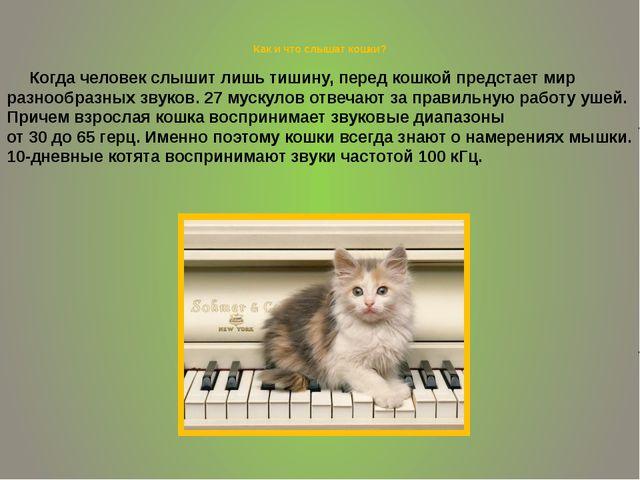 Как и что слышат кошки? Когда человек слышит лишь тишину, перед кошкой предс...