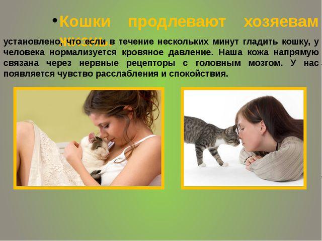 Кошки продлевают хозяевам жизнь. установлено, что если в течение нескольких...