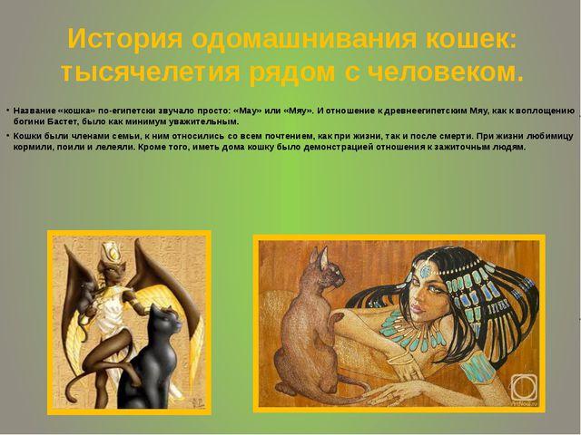 История одомашнивания кошек: тысячелетия рядом с человеком. Название «кошка»...