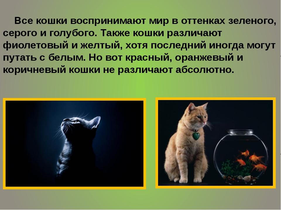 Все кошки воспринимают мир в оттенках зеленого, серого и голубого. Также кош...