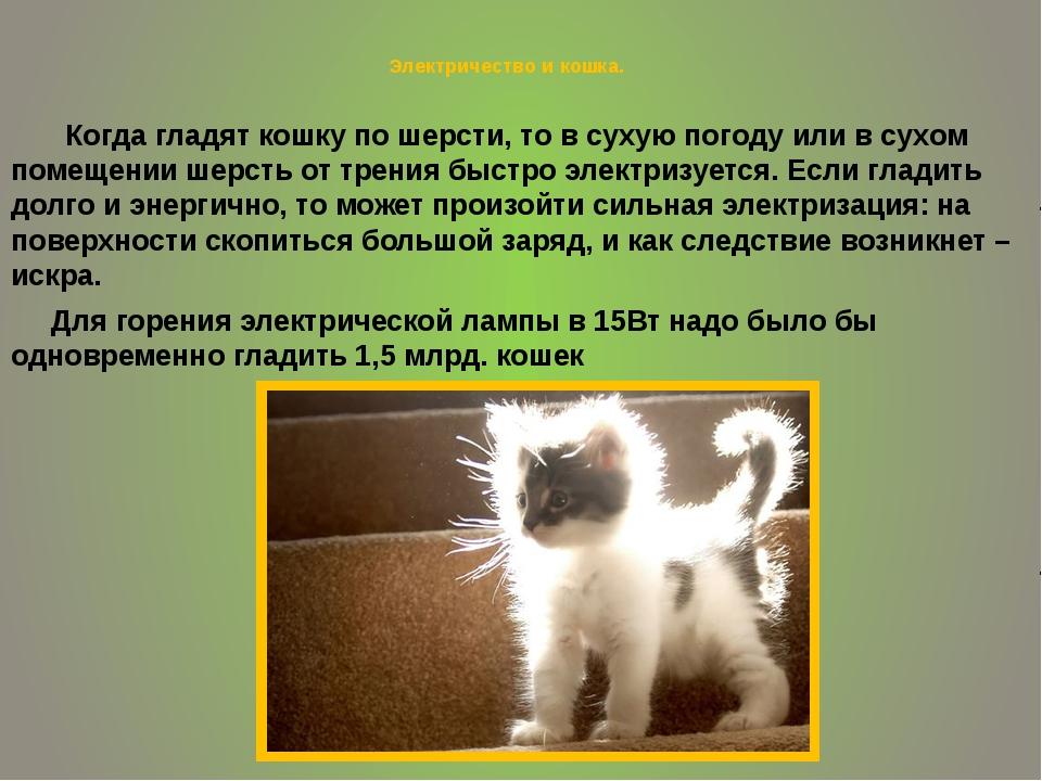 Электричество и кошка. Когда гладят кошку по шерсти, то в сухую погоду или в...