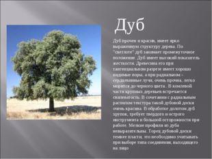 """Дуб прочен и красив, имеет ярко выраженную структуру дерева. По """"светлоте"""" ду"""