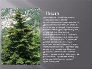 Древесина пихты обычно мягкая, легкая (375 кг/м3). Пихта — безъядровая спелод