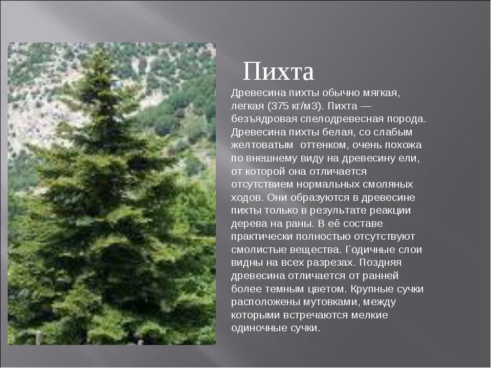 Древесина пихты обычно мягкая, легкая (375 кг/м3). Пихта — безъядровая спелод...
