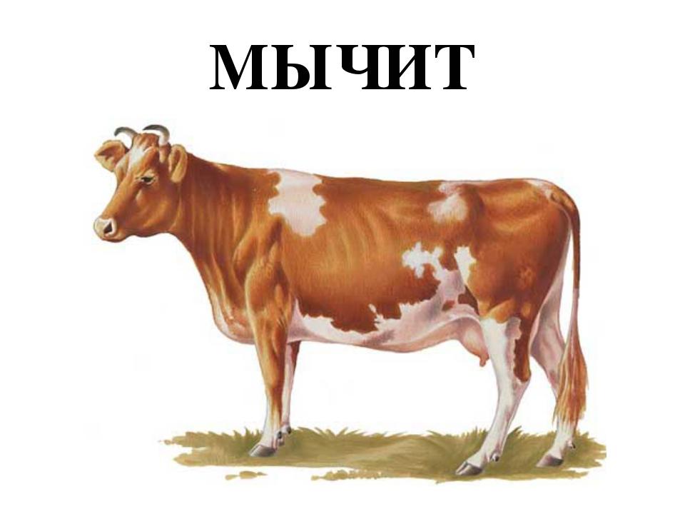 МЫЧИТ