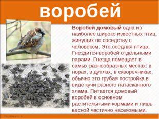 воробей Воробей домовый одна из наиболее широко известных птиц, живущих по со