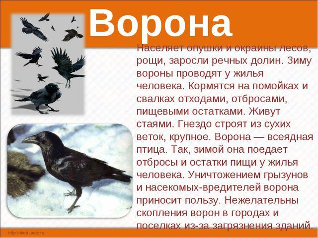 Ворона Населяет опушки и окраины лесов, рощи, заросли речных долин. Зиму воро...