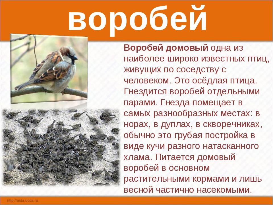воробей Воробей домовый одна из наиболее широко известных птиц, живущих по со...