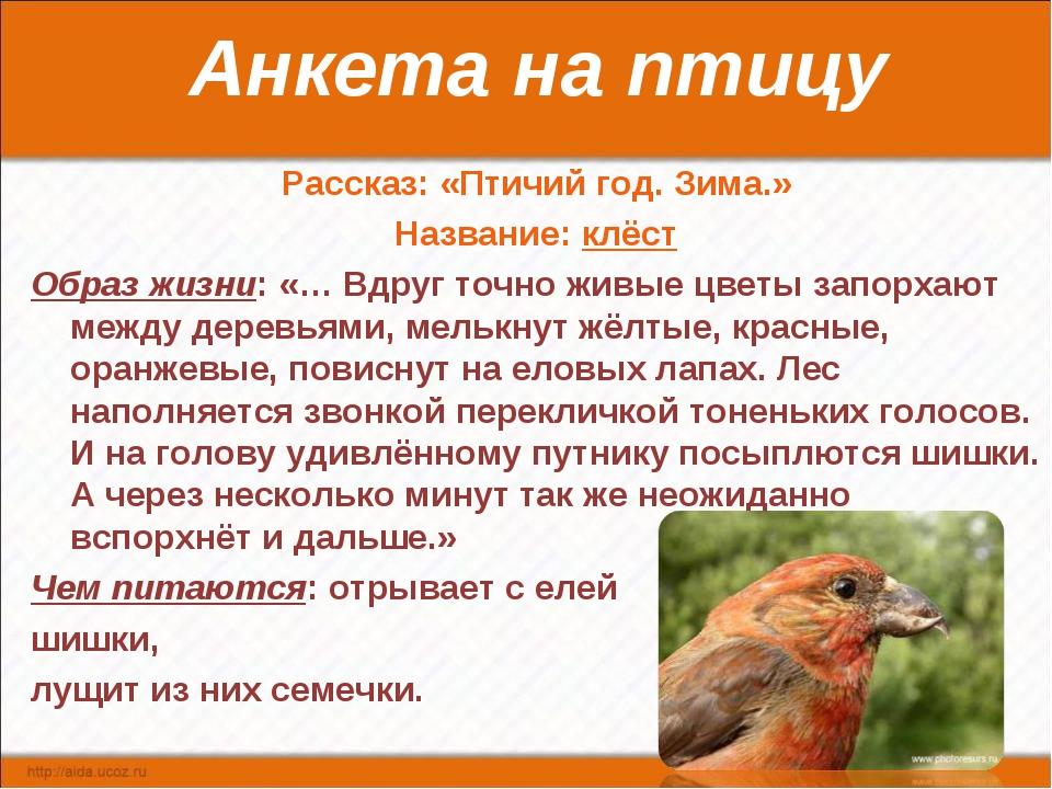 Анкета на птицу Рассказ: «Птичий год. Зима.» Название: клёст Образ жизни: «…...