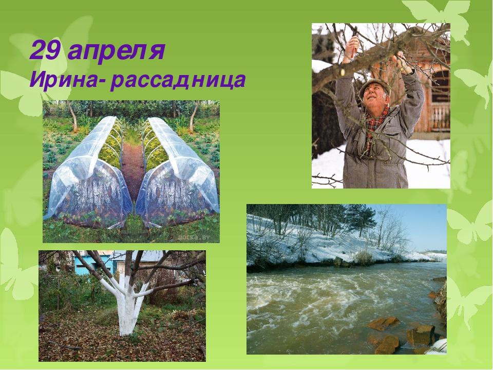 29 апреля Ирина- рассадница