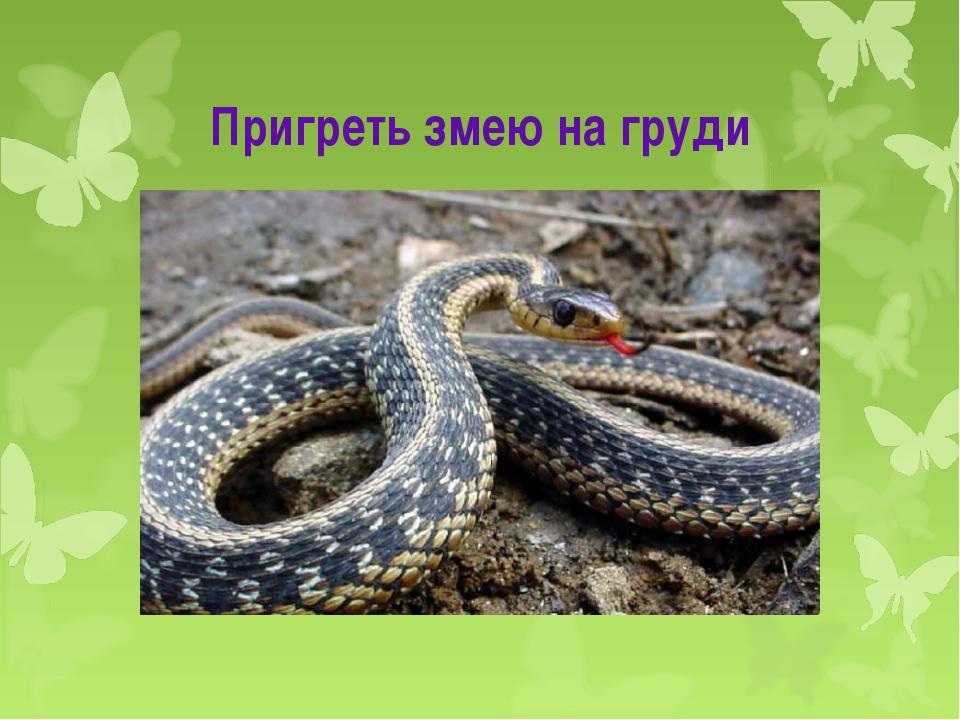 Пригреть змею на груди