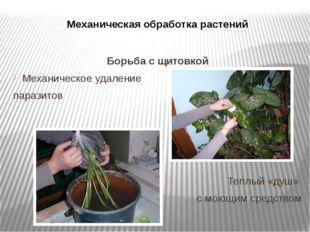 Механическая обработка растений Борьба с щитовкой Механическое удаление параз