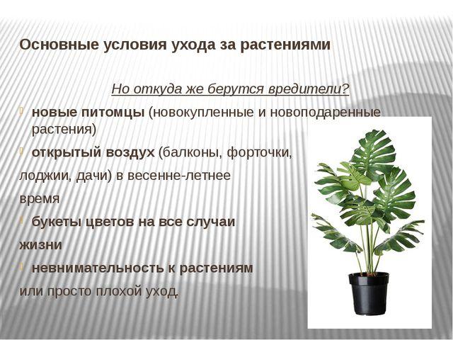 Основные условия ухода за растениями Но откуда же берутся вредители? новые пи...